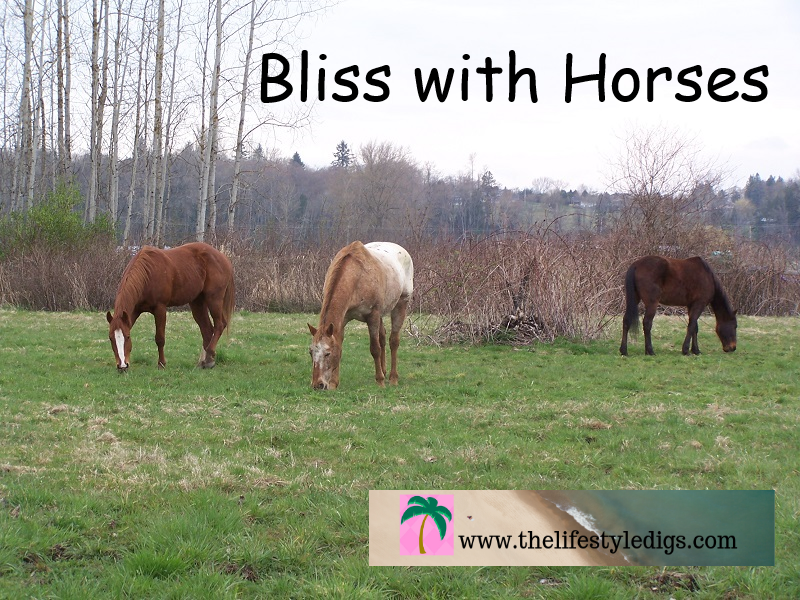 Bliss with Horses