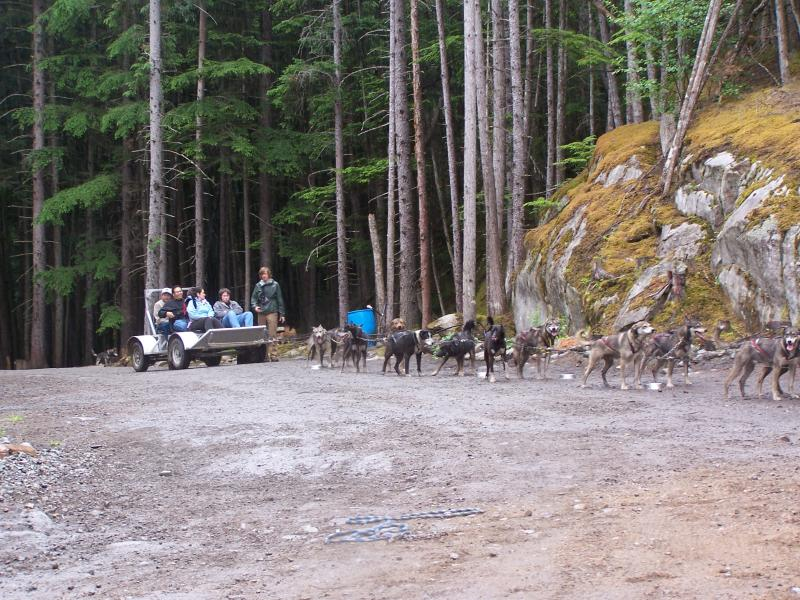 Port of Call on Holland America Zuiderdam's Alaska Cruise: Skagway. Musher's dog sled camp.