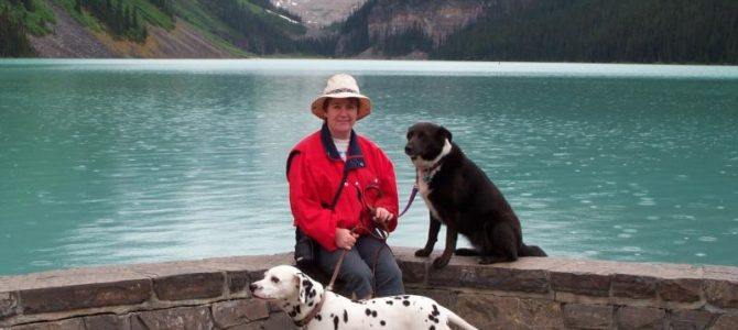What to do with your Dogs when you Travel