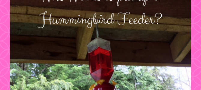 Who Wants to put up a Hummingbird Feeder?