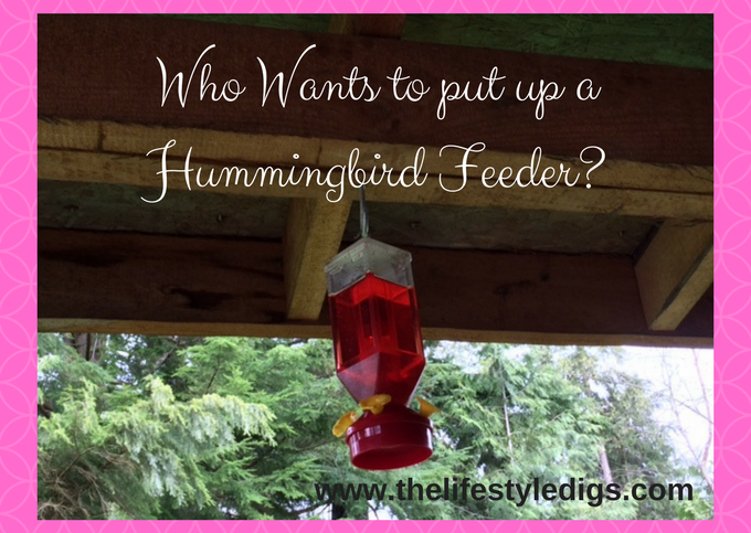 Who Wants to put up a Hummingbird Feeder_