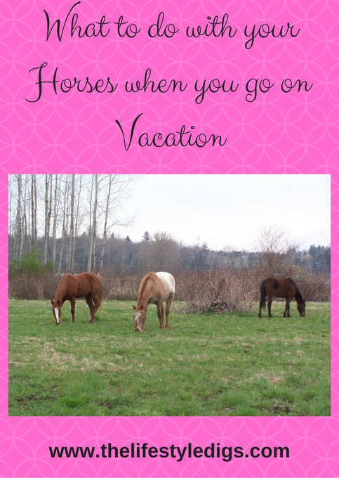 What to do with your Horses when you go on Vacation
