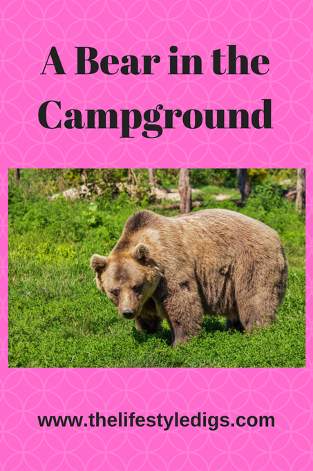 A Bear in the Campground