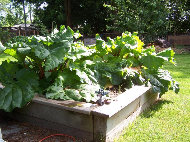 I'm the Keeper of the Rhubarb