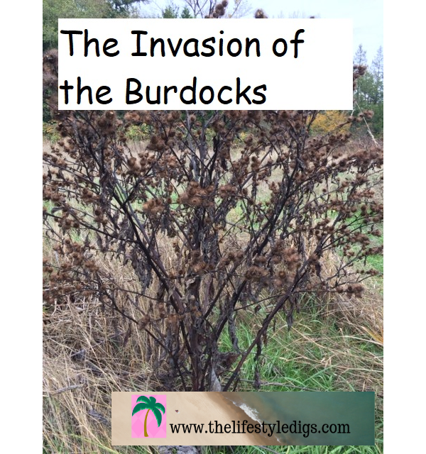 The Invasion of the Burdocks