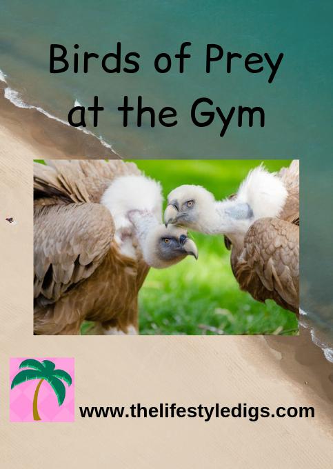 Birds of Prey at the Gym