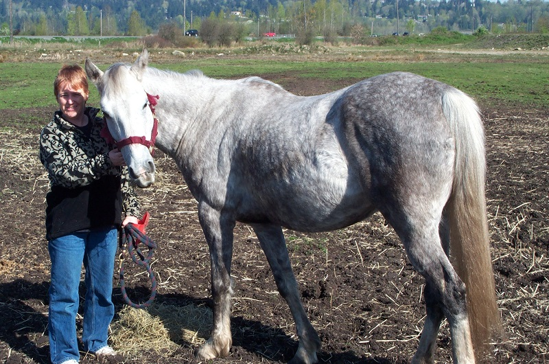 Bliss with horses. 8 ways to spend more time with horses.