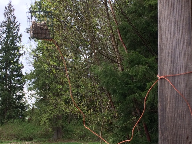 Mysterious Disappearance of the Bird Suet Cage