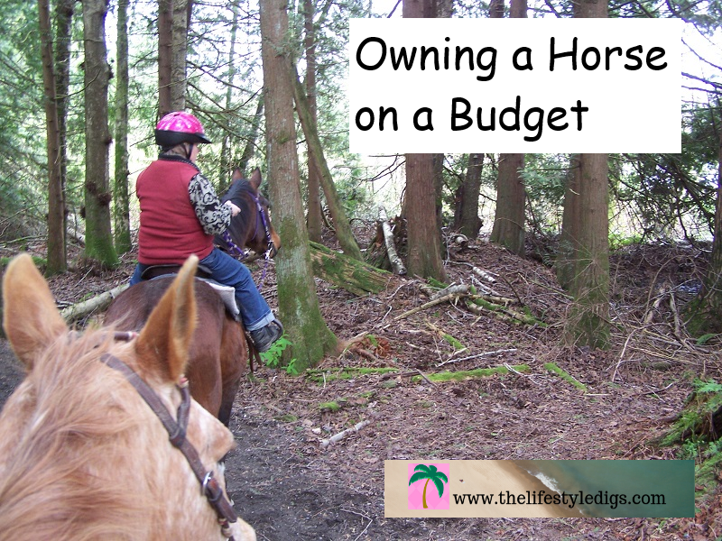 Owning a horse on a budget