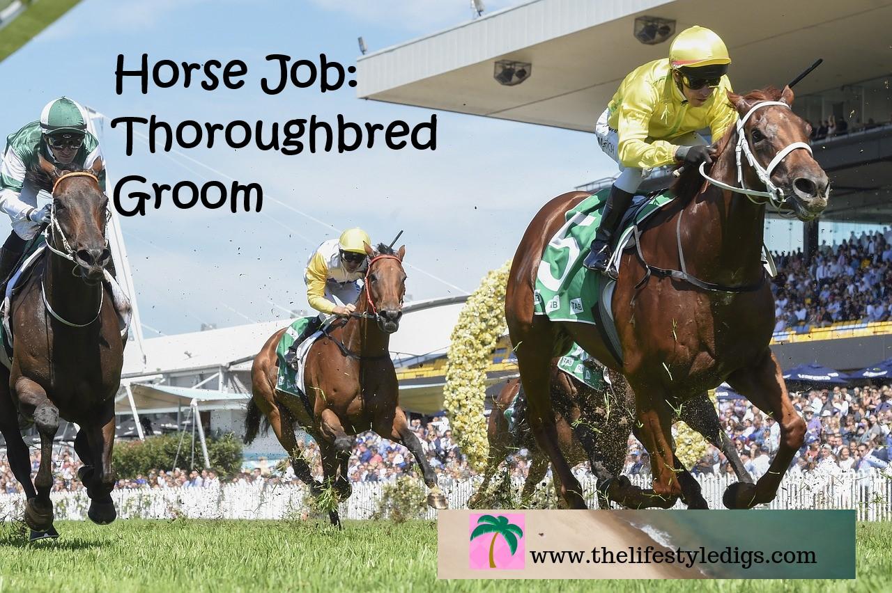 Horse Job: Thoroughbred Groom