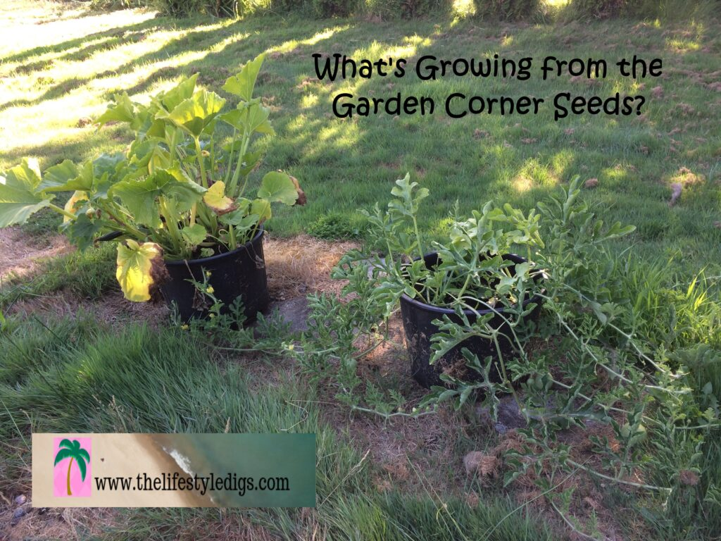 What's Growing from the Garden Corner Seeds?